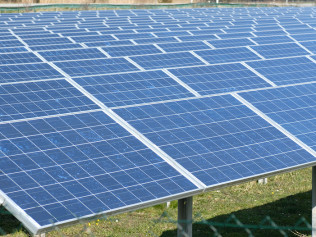 Solar Farm Weed Management